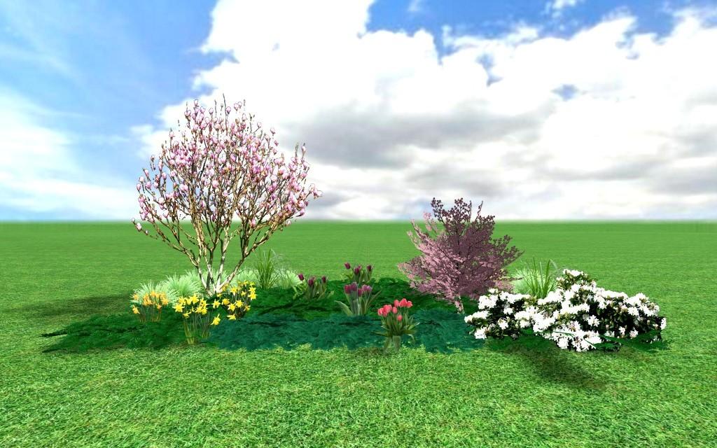 Okrasné třešně jako keře nebo malé stromy