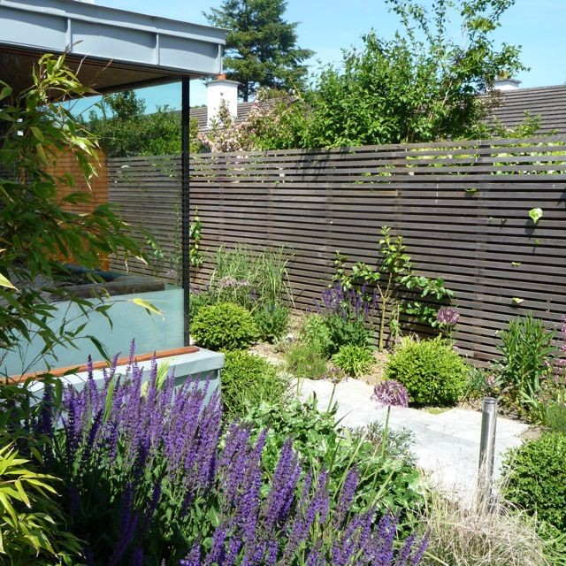 Narrow cedar slatted fence, Salvia