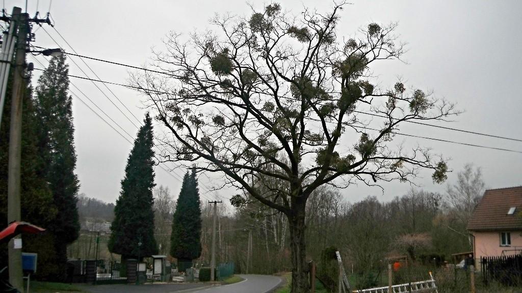 Arborista Ladislav Kunik 002