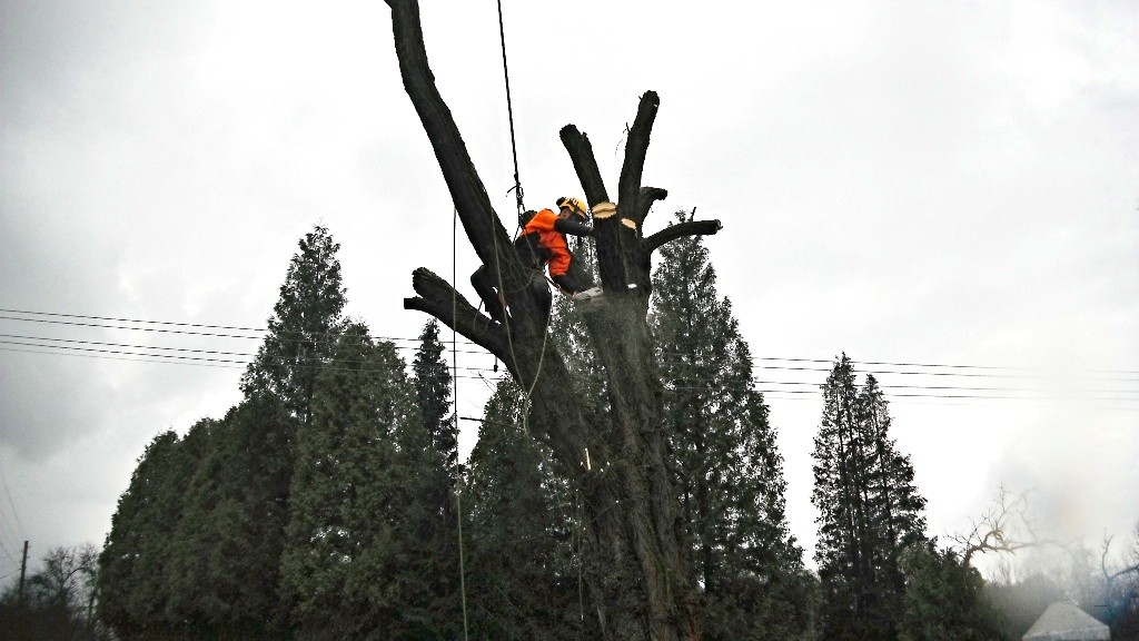 Arborista Ladislav Kunik 004