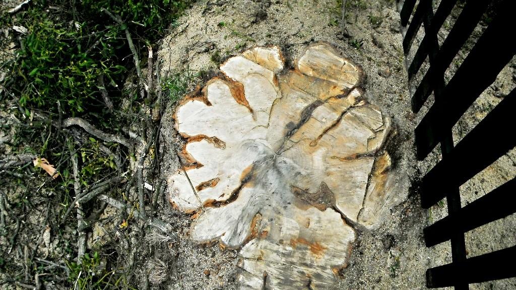 Arborista Ladislav Kunik 009