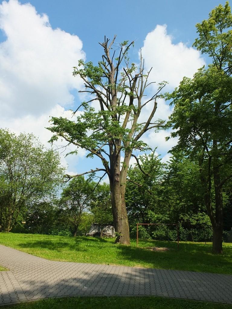 Arborista Ladislav Kunik 037