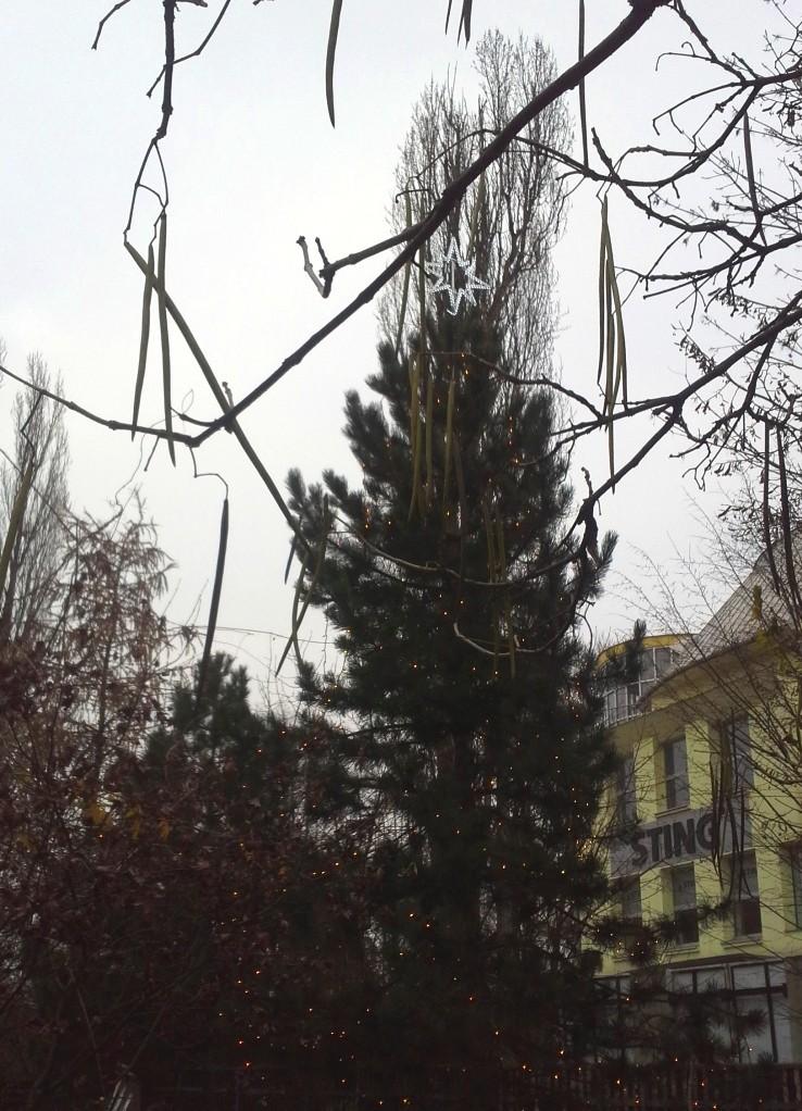 Arborista Ladislav Kunik 080